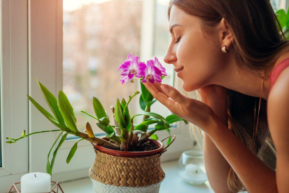 Strony świata a rośliny, które mogą zagościć na naszych parapetach
